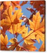 Fall Art Orange Autumn Leaves Blue Sky Baslee Troutman Canvas Print