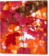 Fall Art Red Autumn Leaves Orange Fall Trees Baslee Troutman Canvas Print