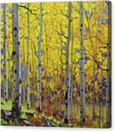 Fall Aspen Hill  Canvas Print
