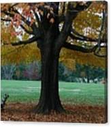 Fall At Maymont Canvas Print