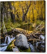 Fall At Mcgee Creek Canvas Print