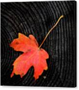 Fall Autumn Leaf On Old Weathered Wood Stump From A Tree Canvas Print