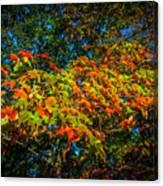 Fall Begins Canvas Print