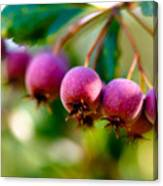 Fall Berries Canvas Print