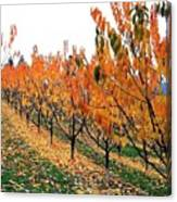 Fall Cherry Orchard Canvas Print
