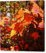 Fall Color 2 Canvas Print