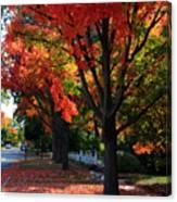 Fall Color 2010 No 5 Canvas Print
