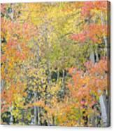 Fall Color At North Lake Canvas Print