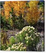 Fall Color Comes To Dillon Reservoir Canvas Print