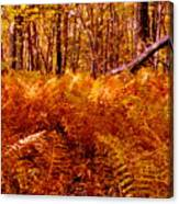 Fall Color In The Woods Canvas Print