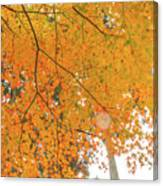Fall Color Maple Leaves At The Forest In Aichi, Nagoya, Japan Canvas Print