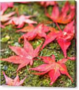 Fall Color Maple Leaves At The Forest In Nikko, Tochigi, Japan Canvas Print