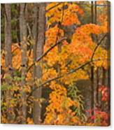 Fall Color Canvas Print