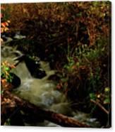 Fall Color Stream Canvas Print