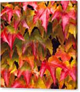 Fall Colored Ivy Canvas Print