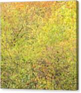 Fall Colors - Abstract Canvas Print