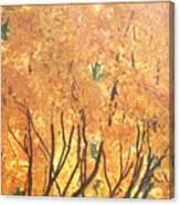 Fall Colors At Cape May Canvas Print