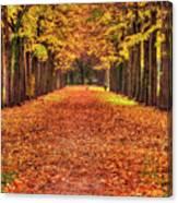 Fall Colors Avenue Canvas Print