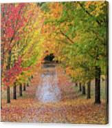 Fall Colors In Oregon Canvas Print