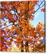 Fall Colors Looking Awesome Canvas Print