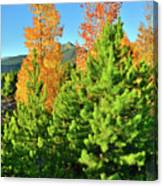 Fall Comes To Dillon Colorado Canvas Print