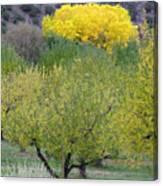 Bright Yellow Leaves, Dixon New Mexico Canvas Print