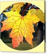 Fall Finery 2 Canvas Print