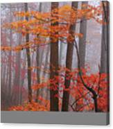 Fall Fog. Canvas Print