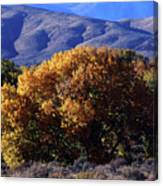 Fall Foliage And Hills, Carson City Canvas Print