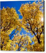 Fall Foliage Near Ruidoso Nm Canvas Print