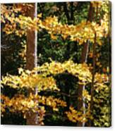 Fall Forest 1 Canvas Print