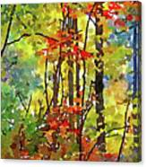 Fall Forest 2 Canvas Print