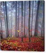 Fall Forest In Fog Canvas Print