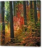Fall Forest Splendor Canvas Print