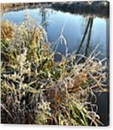 Fall Frost On Grasses Along Nippersink Creek Canvas Print