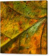 Fall Fusion Canvas Print