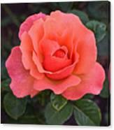 Fall Gardens Rosh Hashana Rose Canvas Print