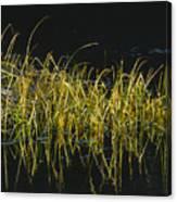 Fall Grasses - Snake River Canvas Print