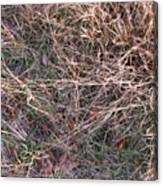 Fall Grasses Canvas Print