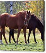 Horses Fall Grazing Canvas Print