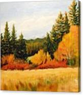 Fall In Chattaroy Canvas Print