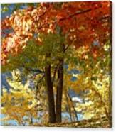 Fall In Kaloya Park 4 Canvas Print