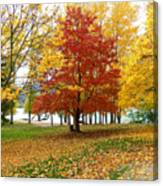 Fall In Kaloya Park 5 Canvas Print
