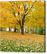 Fall In Kaloya Park 7 Canvas Print