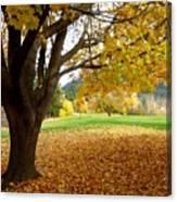 Fall In Kaloya Park 8 Canvas Print