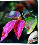 Fall In Shades Of Purple Canvas Print