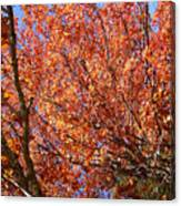 Fall In The Blue Ridge Mountains Canvas Print