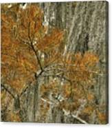 Fall In The Swamp Canvas Print