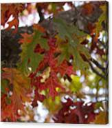 Fall In Virginia Canvas Print