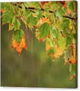 Fall-ing Rain Square Canvas Print